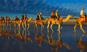 Travelling By Camel in Australia, PDI