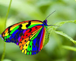 Rainbow Butterfly, Colors of Salvation, PDI