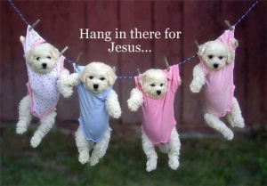 puppies hangin in