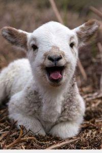 We Love The Lamb Of God, PDI